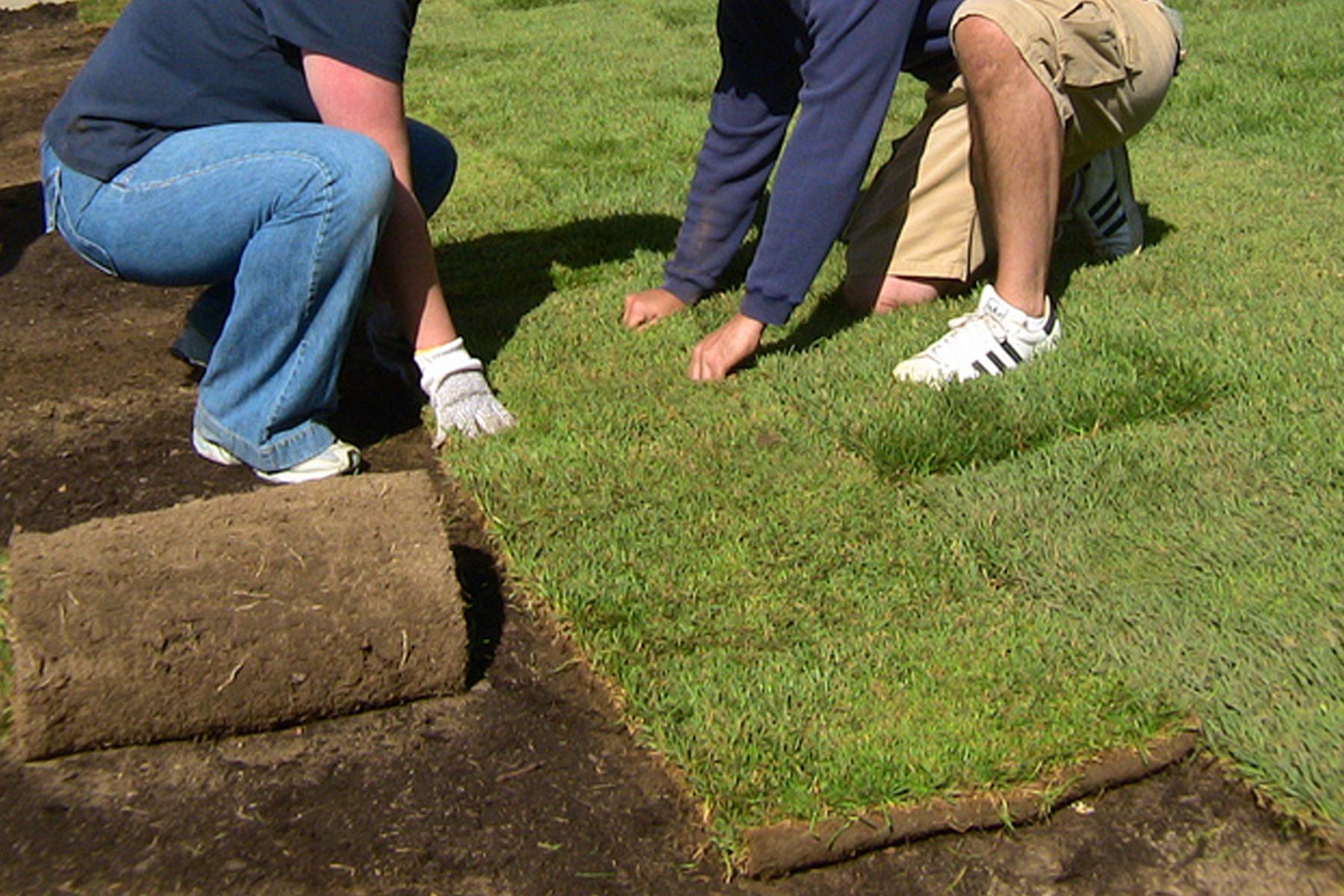 Как срезать газон своими руками